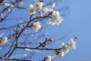 跟团到贵州赤水二日游_贵州赤水漂流旅旅游推荐攻略