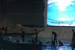 淄博元通旅游网 到青岛栈桥极地海洋世界二日旅游  暑假旅游