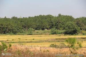 合肥到五千年文博园旅游   十里画廊景区