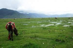 呼和浩特希拉穆仁草原1日尊贵游_含骑马-含牧场活动_纯玩