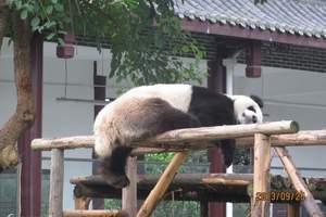 成都到熊猫基地一日游报价【成都到熊猫基地三星堆一日游线路】