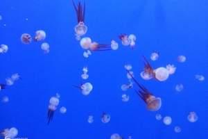 武汉海底世界