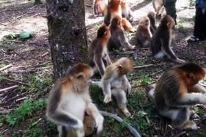长治到宜昌、神农架旅游|双飞四日游|5A级生态旅游景区|野人