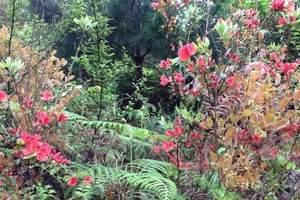 贵州荔波茂兰生态旅游区 石上森林2日旅游