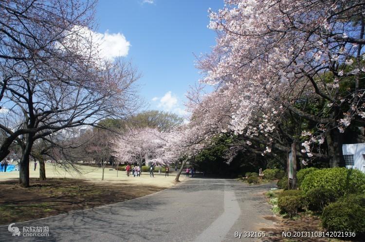 九江出发日本旅游  五星日本富士和风浪漫樱花六日游
