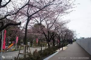 【北京到日本樱花旅游豪华团多少钱】日本樱花温泉六日全程无自费