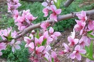 春游到平谷桃花节两日游|平谷拓展两日游|平谷石林峡烧烤二日游
