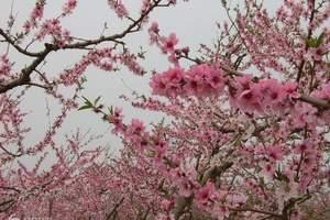 五一河口赏万亩桃花 游太平湾游船一日游 五一桃花节