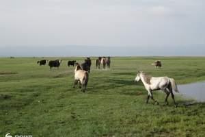 乌鲁木齐出发到新疆伊犁那拉提草原|霍尔果斯|赛里木湖双飞三日