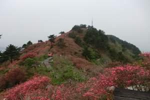 """九顶塔""""山歌节""""植树一日游行程丨亲子植树"""