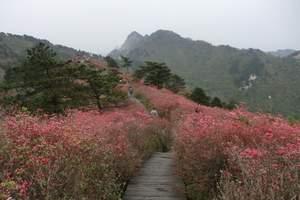 永州阳明山国家森林公园(国家AAAA级景区)