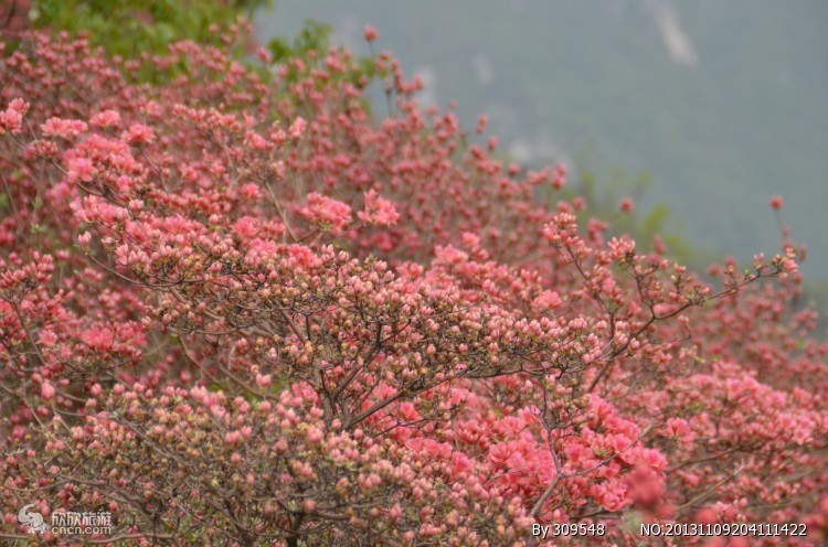 """湖北春季""""十大赏花游""""线路  最全的赏花攻略来了_武汉旅游攻略"""