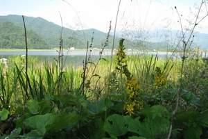 大九湖高山湿地