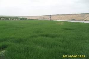 包头去草原沙漠旅游|希拉穆仁草原+响沙湾两日游