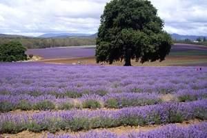 西安出发去澳大利亚墨尔本行程 澳大利亚墨尔本9天美食之旅
