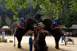 野象谷大象表演