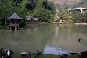 西双版纳自然保护区