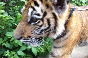 【唐山到北戴河游】唐山到北戴河野生动物园、集发一日游