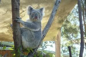澳大利亚旅游 深圳出发到 澳大利亚/澳洲大堡礁8天阳光之旅