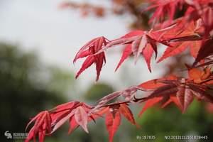 洛阳去木札岭旅游 洛阳年票一日游到木札岭看红叶