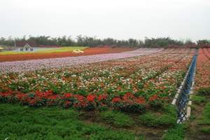 【团购百万葵园一天】广州至南沙百万葵园一日游|感受无限花海
