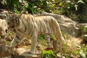 泰安亲子游/泰安到济南野生动物园一日游/济南野生动物园简介