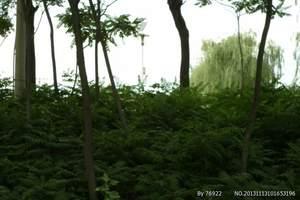北京周边游 野三坡、百里峡、白草畔、十渡 汽车 二日游
