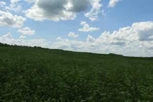 消夏避暑的绿色净土木兰围场坝上草原夏令营