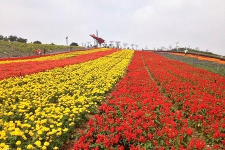 惠州出发到 深圳东部华侨城茶溪谷一天游