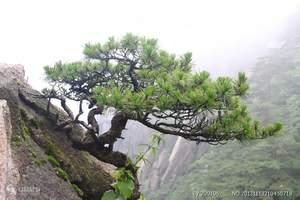 杭州到黄山登山+黄山泡温泉三日游<冬季经典>先登黄山再泡温泉