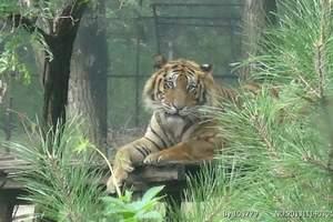 秦皇岛野生动物园团购价门票预定,北戴河旅游景区