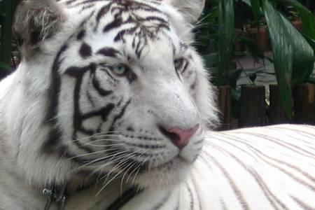 惠州出发到 广州番禺长隆香江野生动物园一日游