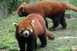 四川熊猫基地