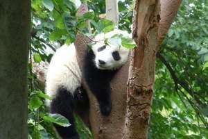 4月成都旅游|三星堆、熊猫基地一日游|成都旅游地图
