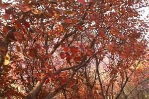 【纯玩无购物|湘潭出发】长沙岳麓山赏枫、长沙滨江文化园一日游