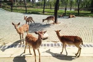淹城野生动物园