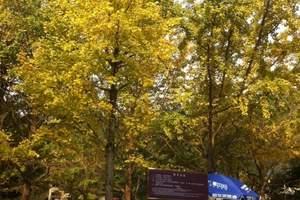 诸暨香榧森林公园、 米果果小镇亲子一日游
