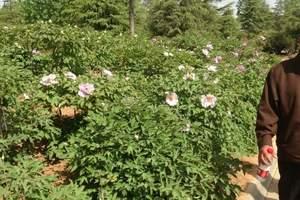 洛阳神州牡丹园