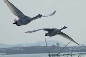 郑州去威海、蓬莱、烟台、养马岛,鲸鲨馆、桑沟湾深度双飞5日游