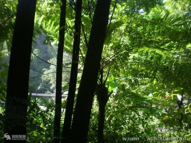 西双版纳原始森林图片