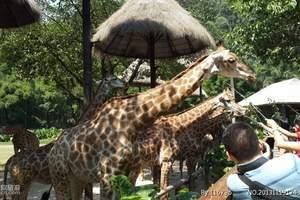 深圳野生动物园门票预订成人票亲子票合家欢套票预订