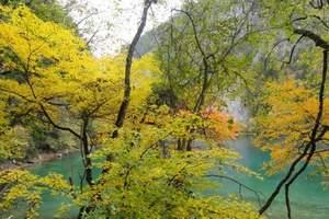 泰安出发到成都、九寨、黄龙、峨眉、乐山双飞8日游九寨旅游推荐