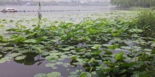 微山湖湿地红荷风景区