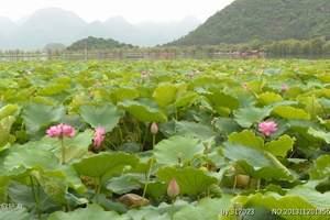 8月初北京到云南旅行团报价:昆明-大理-丽江双飞六日游