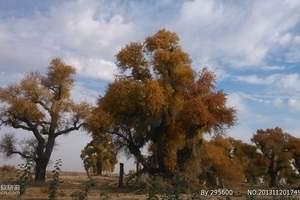 新疆租车游:喀纳斯、那拉提、巴音布鲁克、胡杨林环线10日游