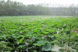 济宁微山湖