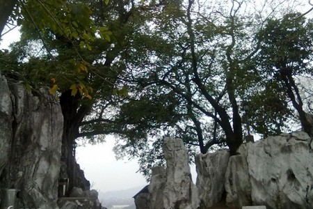 惠州出发到 肇庆鼎湖山九龙宝鼎、庆云寺祈福、七星岩二天