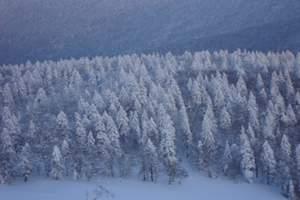 哈尔滨出发到亚布力滑雪、中国雪乡2日游(品质团)