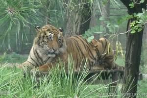 富阳野生动物园亲子游 杭州出发到富阳野生动物园一日游