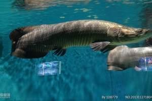 青岛海底体验 青岛海底潜水 青岛海底观赏